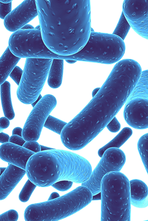 probiotika_slide.png